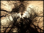 adoration_for_the_sun_by_pagan_live_style