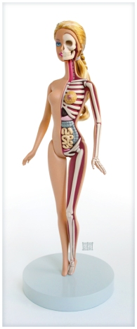 barbie_anatomical_model_by_freeny-d5dazp9