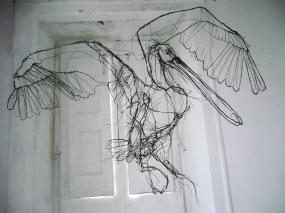 david-oliveira-pelican