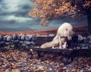 feelin__blue_by_dresew-d8321xu