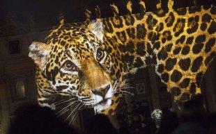 Fiat-Lux-leopard_3521821k