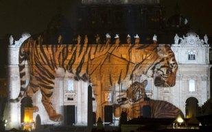 Fiat-Lux-tigers_3521795k