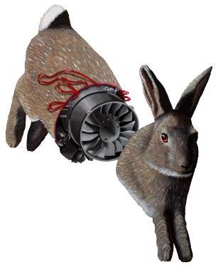 fnm-bunny