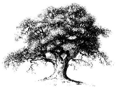 oak-tree-2
