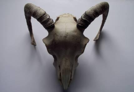 pagan_alter_skull