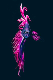 pink-fish-bodypainting