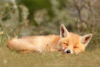 sleeping_cuty_by_thrumyeye-d899del