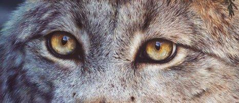 close_up__by_denismayerjr-d99h6nl