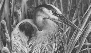 great_blue_heron_pencil_drawing_by_denismayerjr-d8urfto