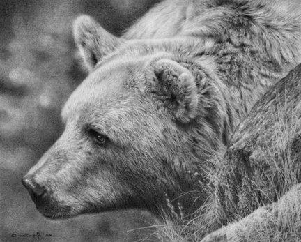 grizzly_bear_study_by_denismayerjr