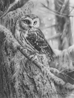 northern_saw_whet_owl_by_denismayerjr-d96dbzq