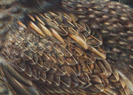 prima_donna________close_up_of_the_feathers__by_denismayerjr-d6jbdjv