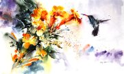 wildlife_watercolor___hummingbird_by_abstractmusiq-d8fhj2w